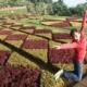 JardimBotanico